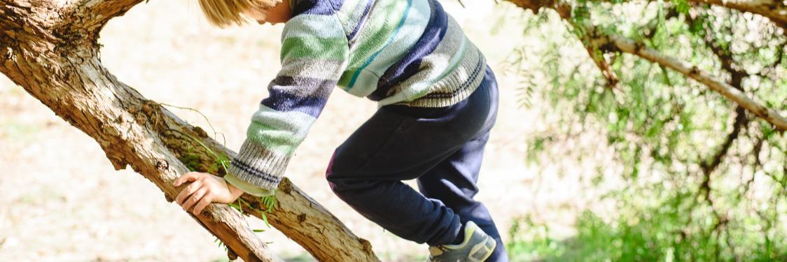 Dreng klatrer i et træ